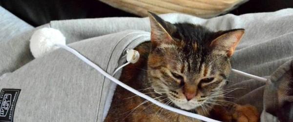 Felpa 39 porta gatto 39 mewgaroo di unihabitat for Felpa con marsupio porta gatto