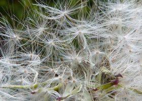 I migliori profumi per chi soffre di allergia