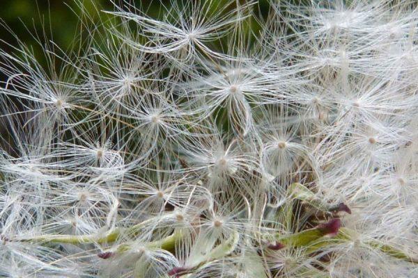 profumi per chi soffre di allergia